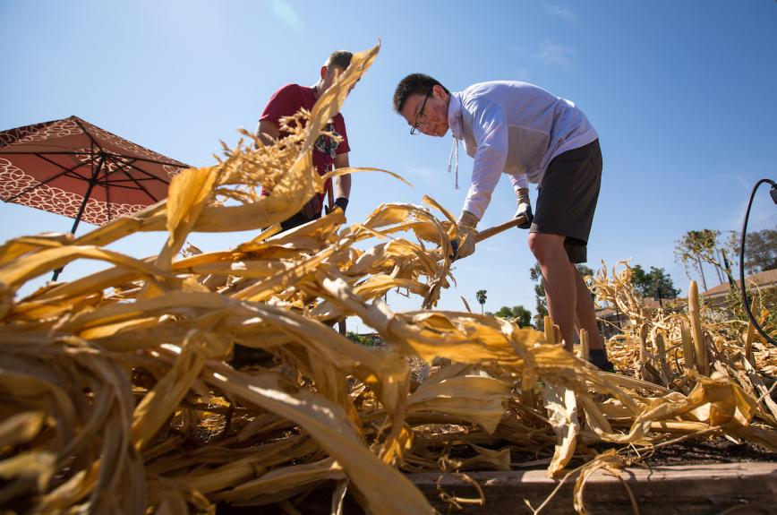 ASU students clearing out debris at a garden on the Poly campus