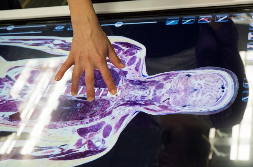 A hand on an image of a body scan